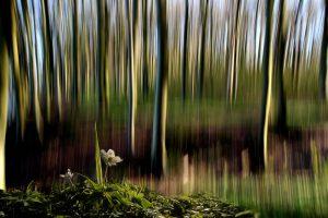 04_Peter_Carstensen_Flowertime
