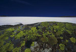 Tommy Jacobsen - Fresvik breen - Bedste landskab