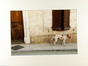 Marianne Skovby Christensen, EFIAP, ESDFThe Matching Dog