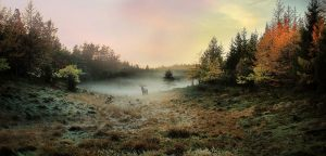 Autumn-Morning---Roland-Jensen-ASDF-AFIAP---Fotolinsen-Silkeborg