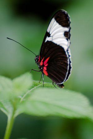 Butterfly---Jarl-Mosbaek-Johannessen---Fotogruppen-Objektiv-Randers