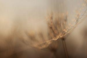 Dew-in-the-morning---Anita-Bjoerndahl-Toft--Pedersen---Digitalia