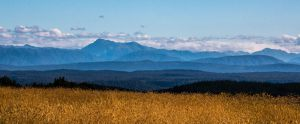 5100_Palle Nielsen_Field_Forest_Mountains
