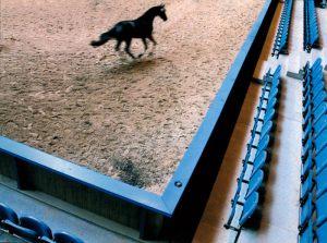 """Hans Duggen Maribo Fotoklub """"Black Horse"""" Dom.dip. Anne V. Leth"""