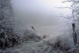 Bedste landskab - Laurits A Hansen - Rimfrost A