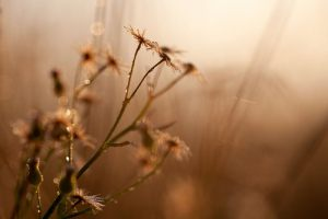 Morning-flowers---Anita-Bjoerndahl-Toft--Pedersen---Digitalia